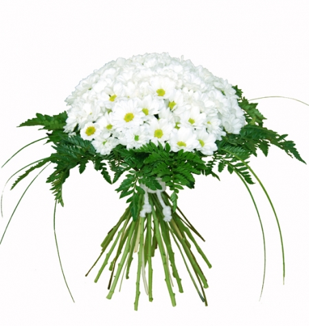 Bouquet de margaritas blancas