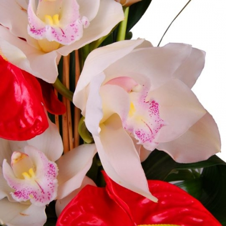 Ramo de orquídeas con anthuriums