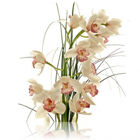 vara de orquidea