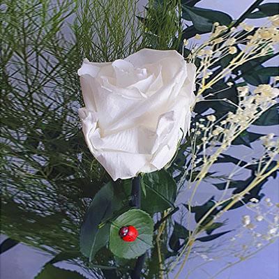 ramillete de rosas preservadas blancas