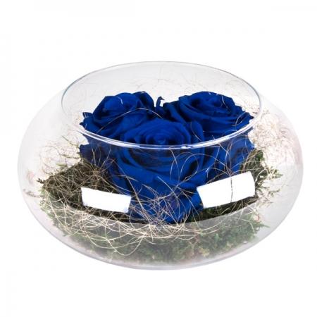 rosas de amor nenufar azul