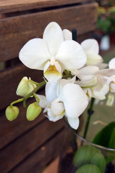 orquidea blanca en jarrón