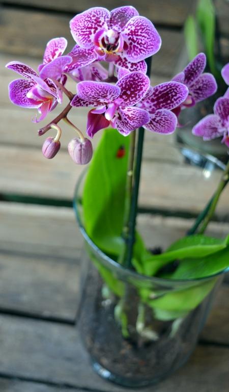 orquidea en jarrón lila