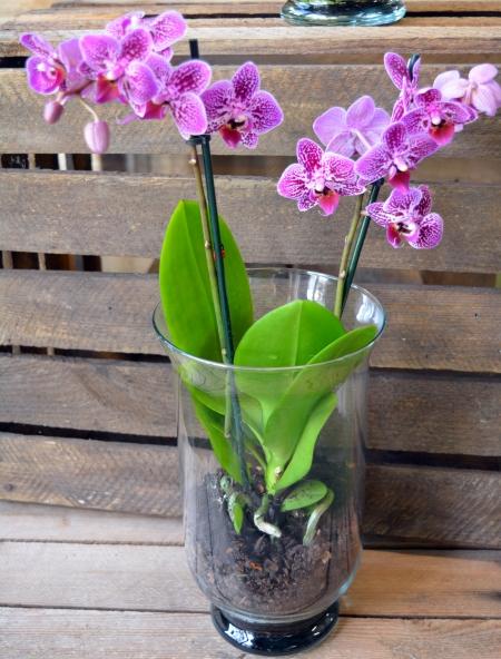 orquidea lila en jarrón