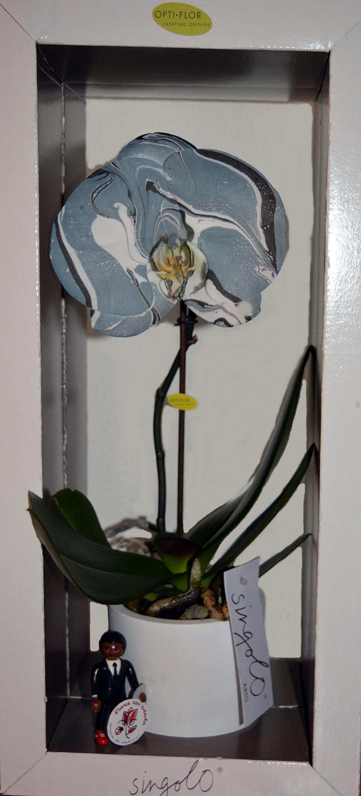 orquiarte azul entera tamano