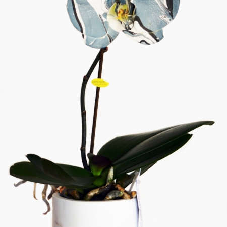 orquidearte azul entera