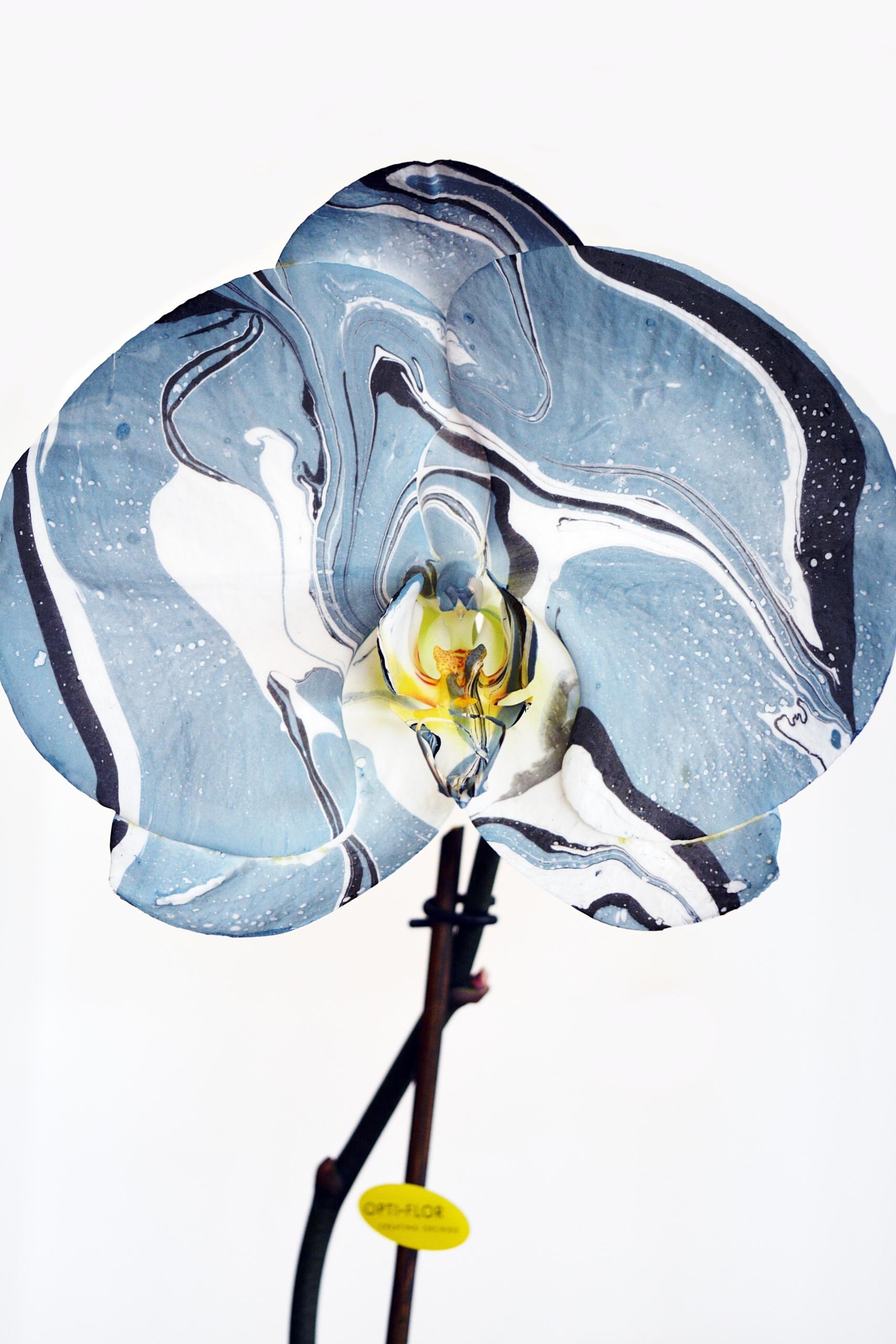 orquidearte azul flor