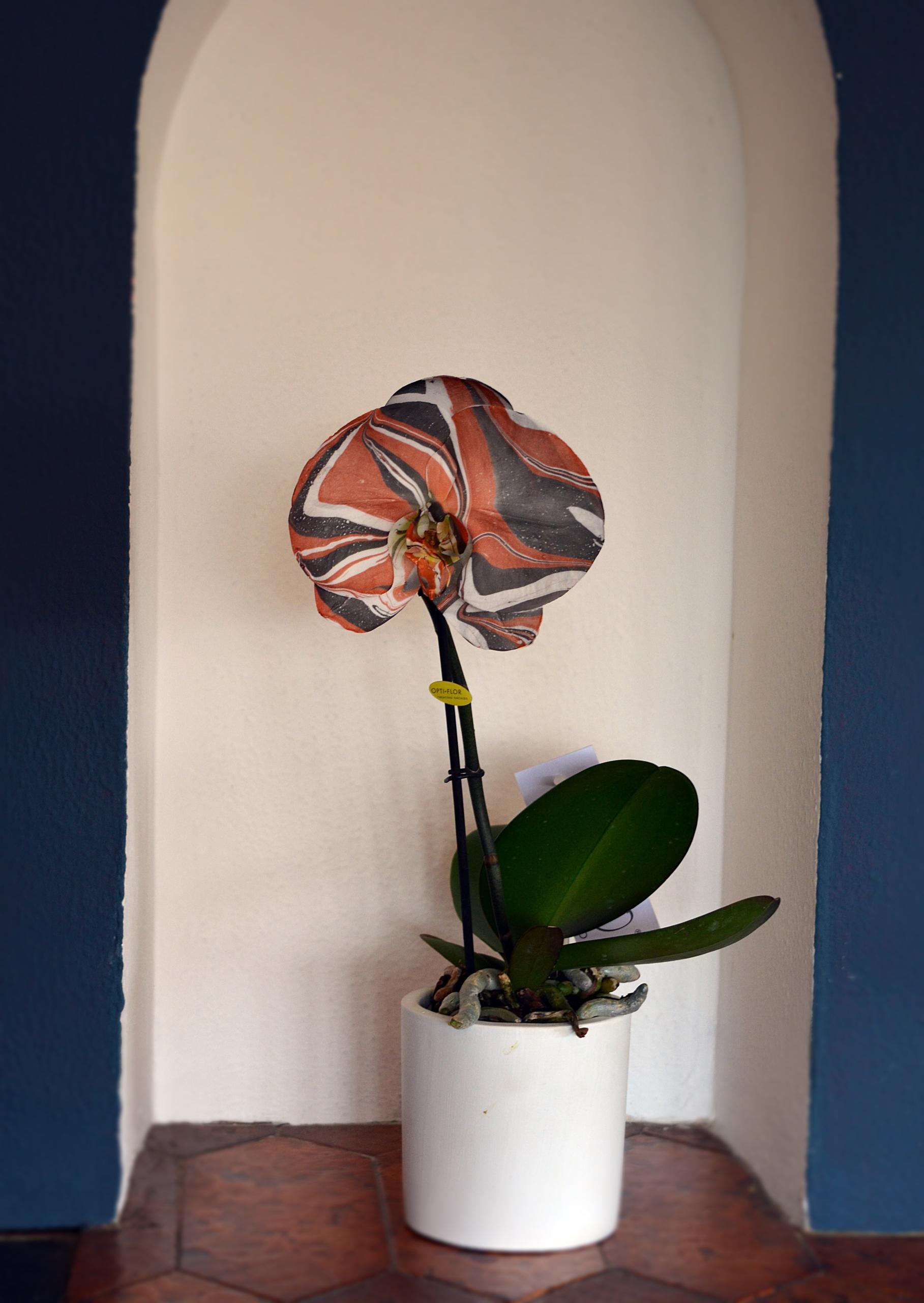 orquidearte naranja entera
