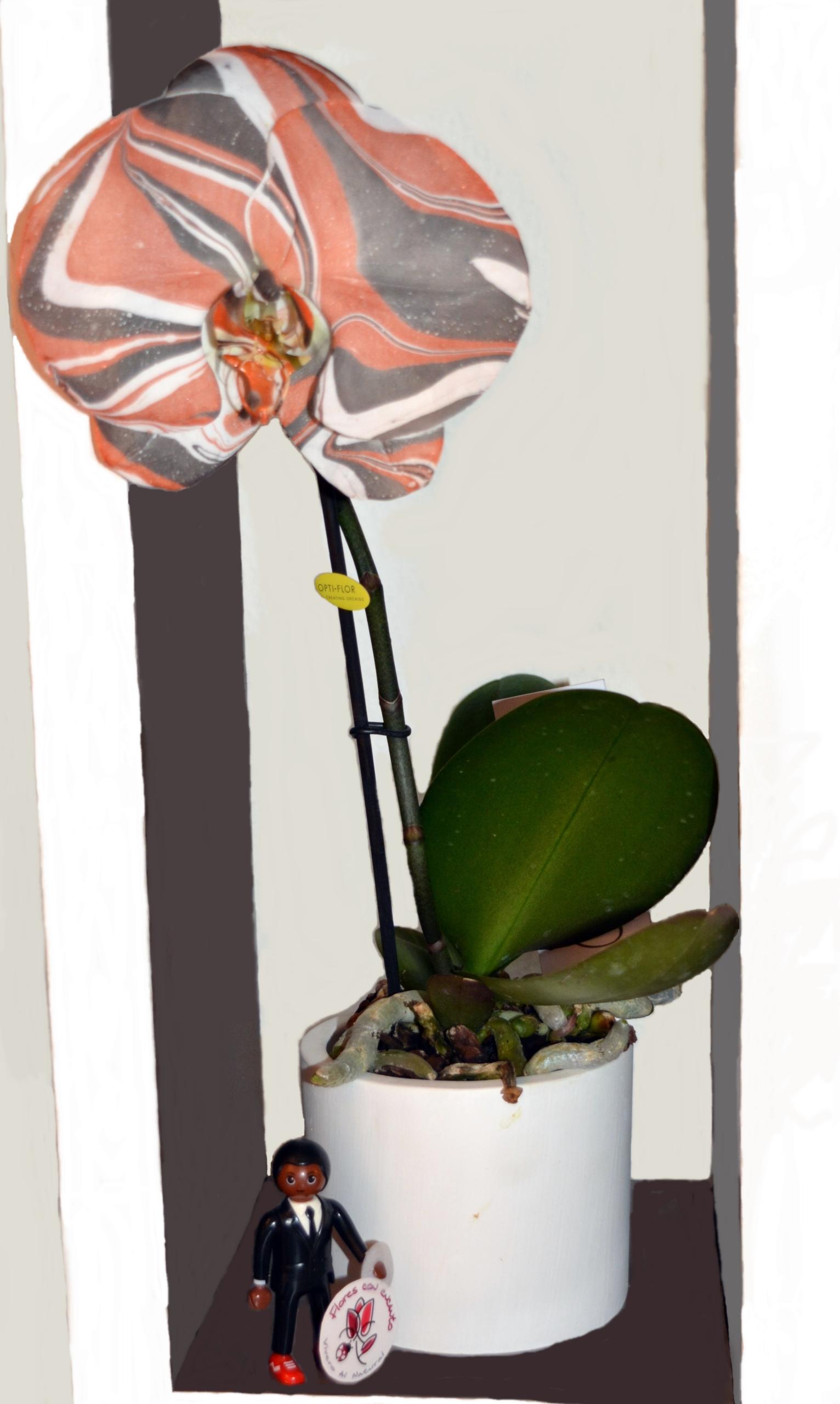 orquidearte naranja entera tamaño