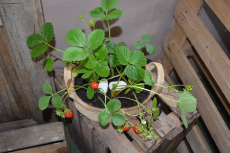 maceta plantas coloridas