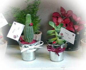 cactus mini cubo