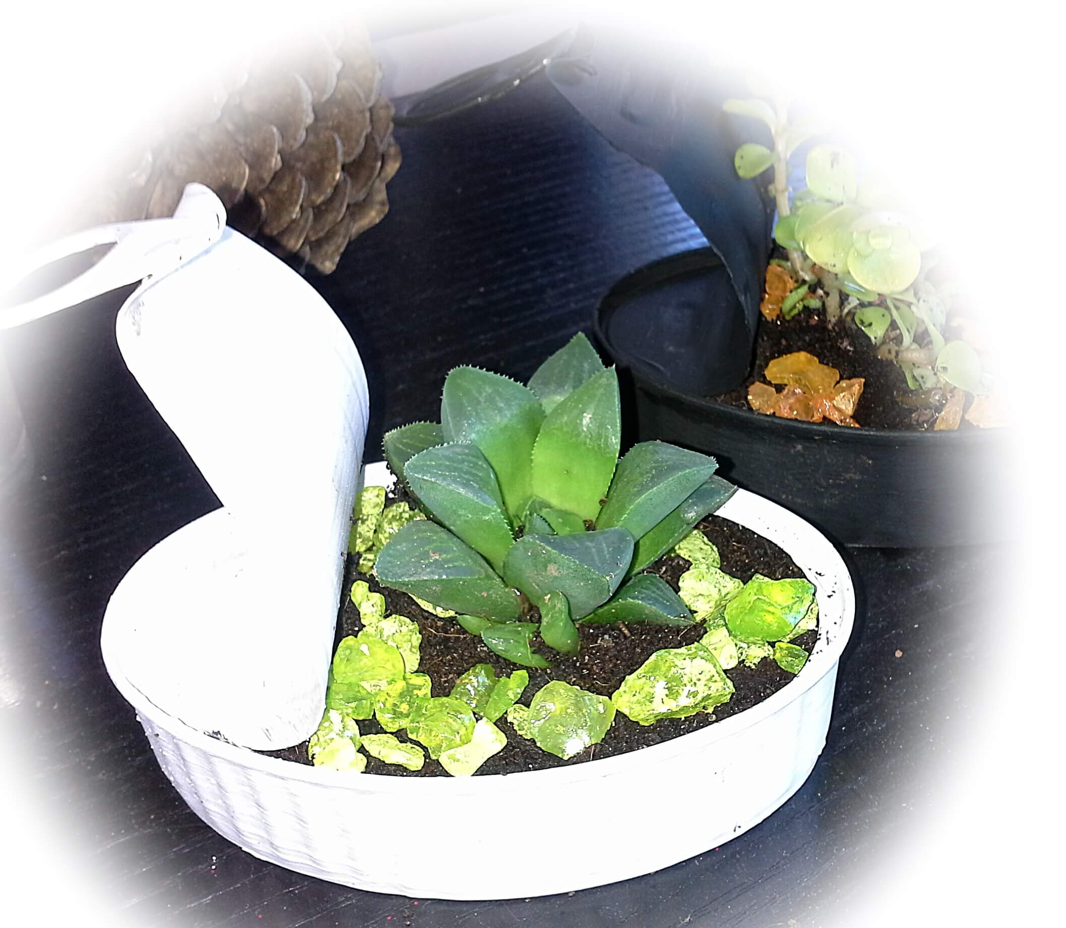 Detalle para invitados - cactus en lata