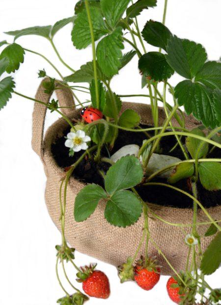 fresas cesto arpillera