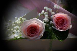 padrino rosas rosas