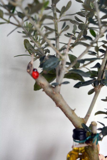 rama olivo maceta