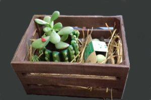 regalos cactus bolas semillas
