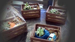 regalos cactus semillas