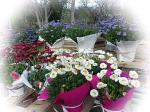 regalos flores temporada