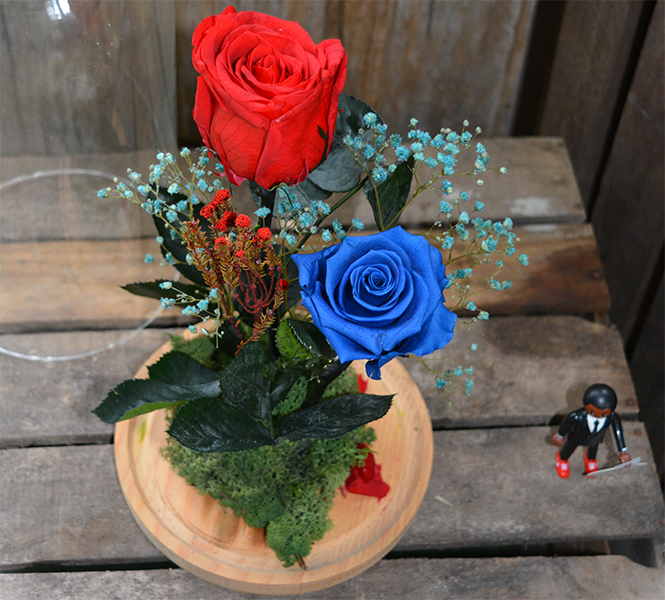 cupula de rosas preservadas de color rojo y azul