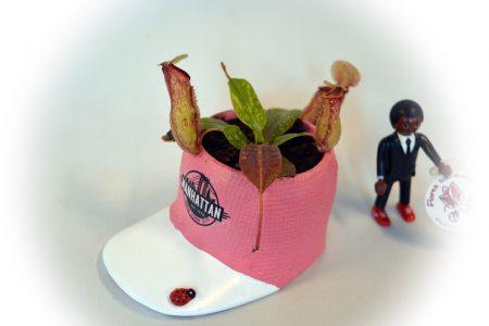 carnivoras maceta rosa