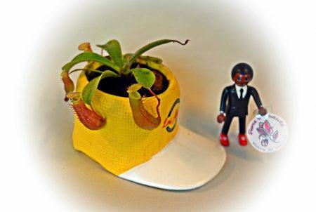 nephentes gorra amarilla