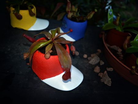 nephentes gorra roja