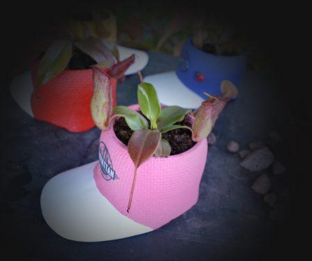 nephentes gorra rosa