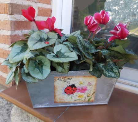 jardinera ciclamen rojo
