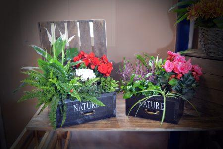 caja plantas flores roja