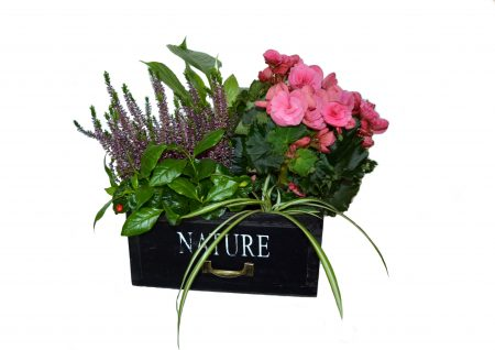 flores-invierno-cajón