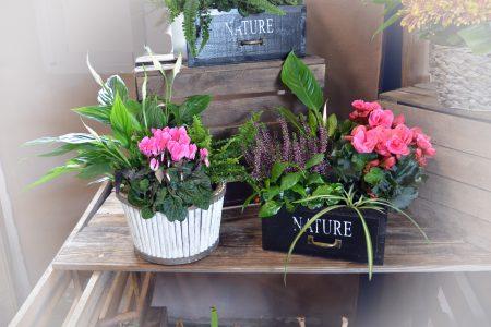 cajas plantas interior