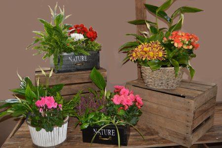 centros plantas