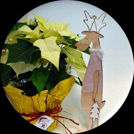 reno madera flor pascua