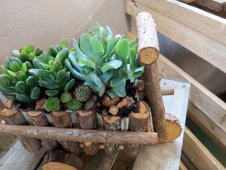 suculentas madera