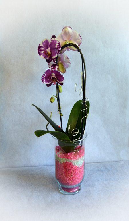 orquidea cristal jaspeada
