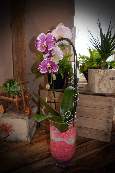 orquidea deco cristal color
