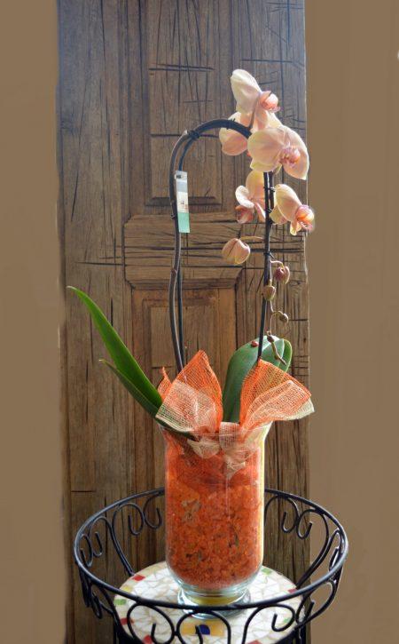 orquidea salmon cristal