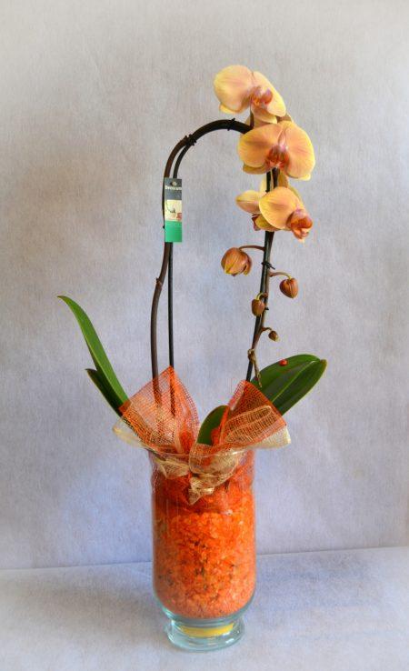 orquidea salmon deco cristal
