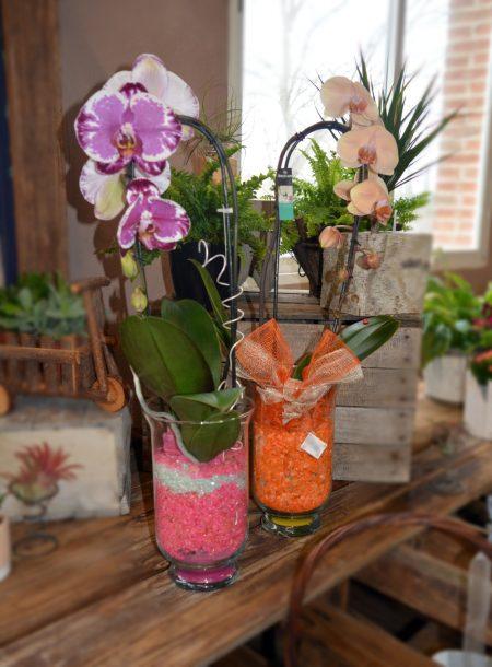 orquideas decoradas