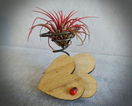planta aire deco romantica 1