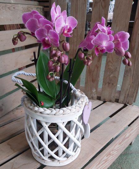 flor orquidea deco scaled