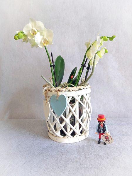 orquidea blanca deco
