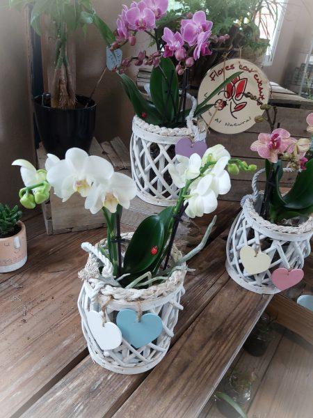 orquidea deco colores