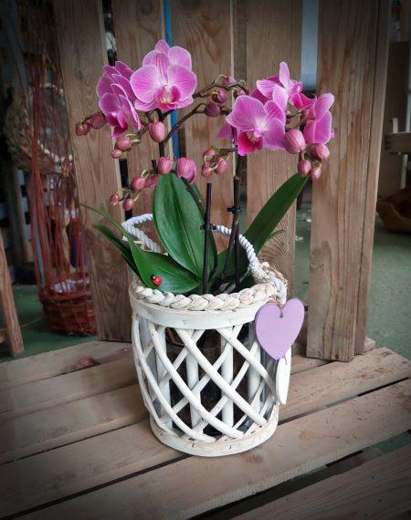 orquidea deco fucsia
