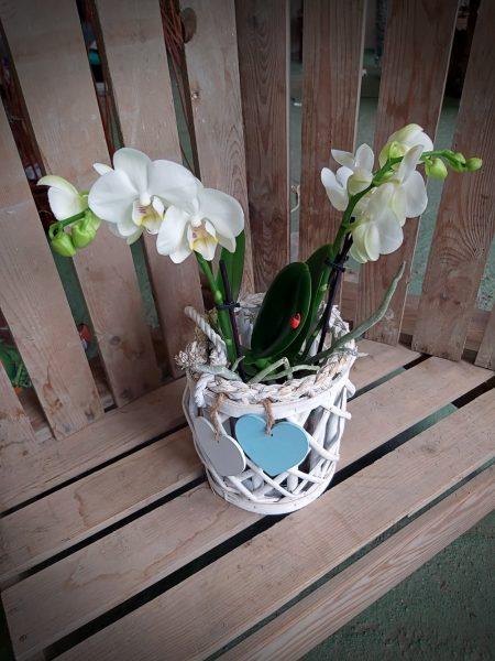 orquidea flor blanca