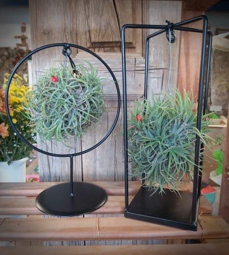 plantas aire interior