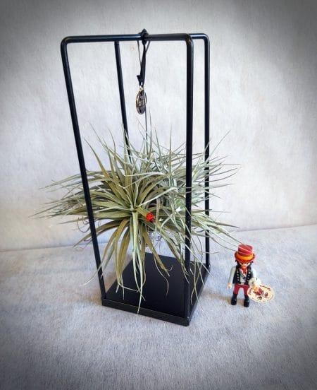 plantas aire soporte