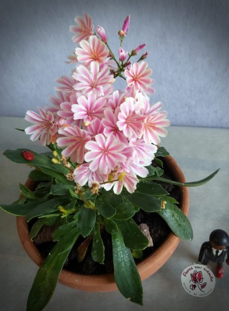 Pequenas plantas flor